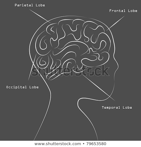 Stock photo: Brain map vector illustration clip-art image