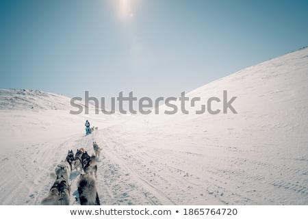 Husky kint tél kutyakölyök kék szemek szem Stock fotó © OleksandrO