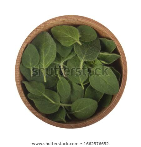 Vers oregano witte kom voedsel Stockfoto © Digifoodstock