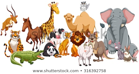 Different kinds of wild animals Stock photo © bluering