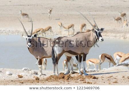áll · víz · park · sivatag · Afrika · fekete - stock fotó © simoneeman