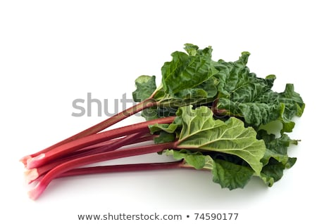 Rhubarb bunch isolated stock photo © fotogal