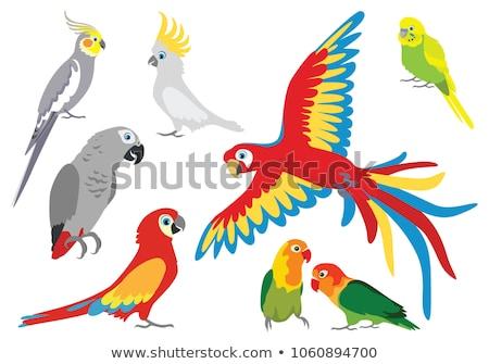 Papagáj rajz ikon terv rajzfilmfigura aranyos Stock fotó © robuart