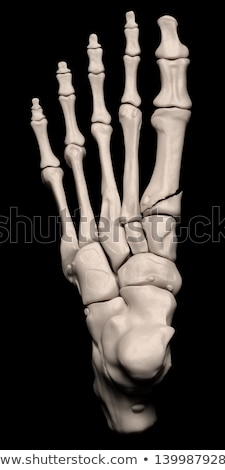 3d rendering medical illustration of the midfoot bone stock photo © maya2008