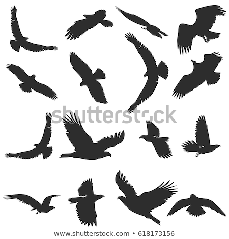 Cartoon Hawk Flying Stock photo © cthoman