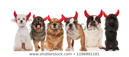 group of funny dogs of different breeds wearing red horns stock photo © feedough