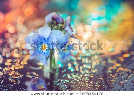 Glass vase with violet flowers in the rain Stock photo © Melnyk