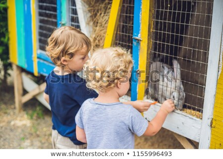 Lány fiú nyulak állatkert szeretet fű Stock fotó © galitskaya