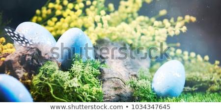 Paskalya beyaz noktalı yumurta yuva bahar Stok fotoğraf © dash