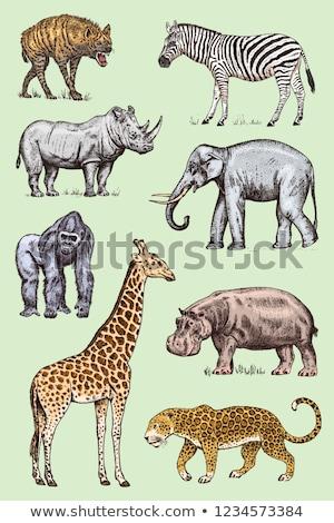 vector set of hippopotamus stock photo © olllikeballoon