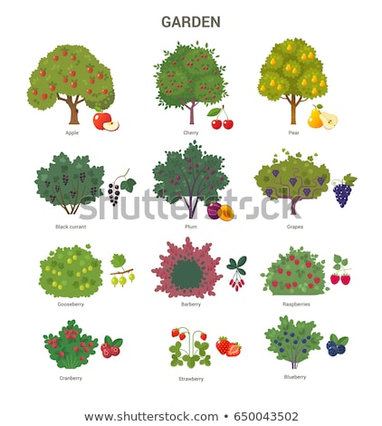 Grapes Growing on Green Bunch and Apples on Tree Stock photo © robuart