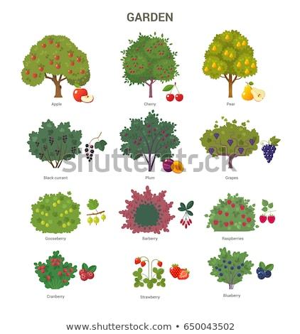 kosár · érett · almák · gyümölcsfa · aratás · vektor - stock fotó © robuart