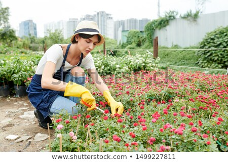 young female gardener or greenhouse worker taking care of plants on flowerbed stock photo © pressmaster