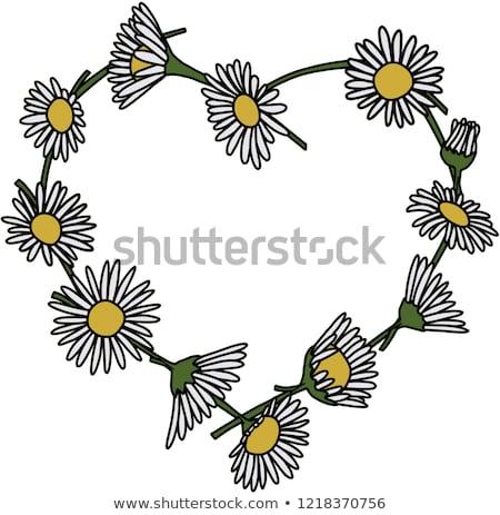 Daisy łańcucha granicy wiosną biały żółty Zdjęcia stock © jsnover