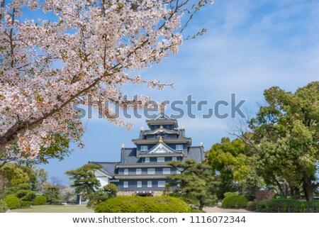 Cherry Blossom and Ducks Stock photo © backyardproductions
