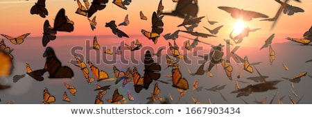 butterfly swarm Stock photo © smithore