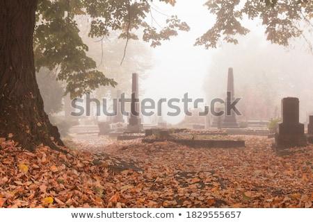 старые надгробная плита кладбища покрытый красный Сток-фото © Elenarts