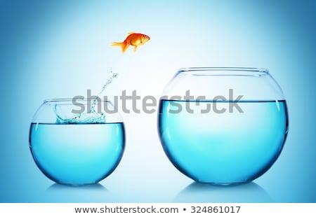 Akvaryum balığı atlama dışarı su ofis cam Stok fotoğraf © mikdam