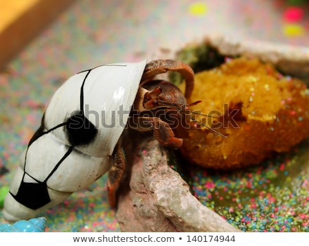 Hermit Crab in his shell Stock photo © zhekos