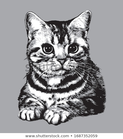 réaliste · dessin · chaton · détaillée · illustration · cute - photo stock © kristyna