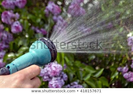 su · bitki · çim · güneş · doğa · gündoğumu - stok fotoğraf © haiderazim