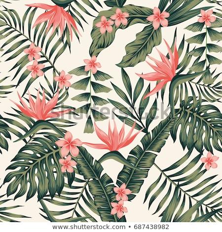 Flor tropical vermelho conjunto parede natureza verde Foto stock © jkraft5