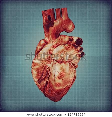 Emberi grunge vér klasszikus kardiovaszkuláris szív Stock fotó © Lightsource