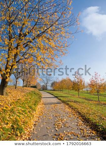 Vidéki jelenet égbolt felhők természet mező gyümölcsök Stock fotó © zzve