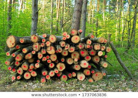 Logging and forest thinning at spring Stock photo © tainasohlman