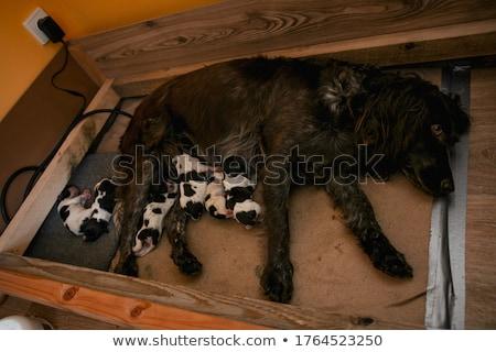 Portré kutya zöld fű gyep fű kert Stock fotó © CaptureLight