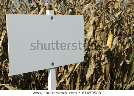 Blank sign in corn agricultural field Stock photo © stevanovicigor