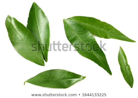 Mandarin isolé blanche peau manger tropicales Photo stock © natika