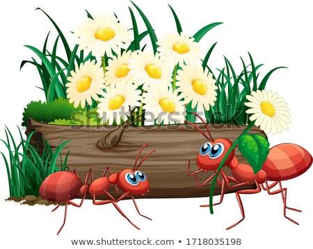little ant stock photo © Hipatia