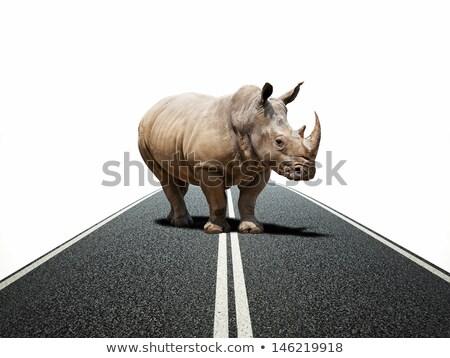 Dev gergedan asfalt yol soyut karayolu Stok fotoğraf © mikdam