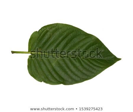 Groene aderen macro blad avocado tonen Stockfoto © tilo