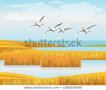 Paar dempen eiland natuur landschap schoonheid Stockfoto © olandsfokus