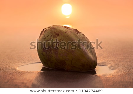 Stock photo: The green nut of a coco lies  on beach sand. India Goa
