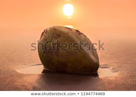 Zöld dió hazugságok tengerparti homok India Goa Stock fotó © mcherevan