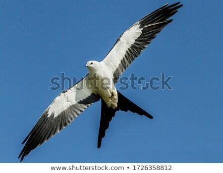 кайт полет Blue Sky небе природы животного Сток-фото © brm1949