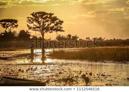 Sunset over the Okavango Delta Stock photo © JFJacobsz