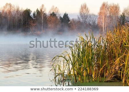 водохранилище тумана закат воды лет дым Сток-фото © chris2766