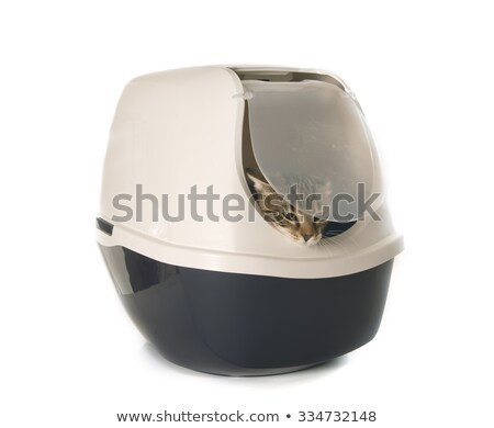 banheiro · recipiente · gato · fora · azul · plástico - foto stock © cynoclub