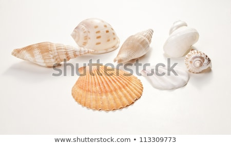 Set of sea shells. Isolated on white, with clipping path. Stock photo © frescomovie