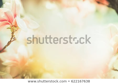 Love Natural Background Stock photo © fenton