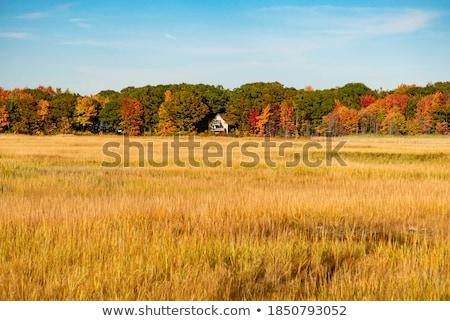 autumnal tree, Maine, USA Stock photo © phbcz