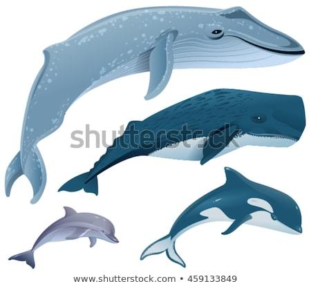 Сток-фото: набор · морской · млекопитающих · синий · кит · сперма