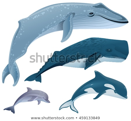 Establecer marinos mamíferos azul ballena esperma Foto stock © orensila