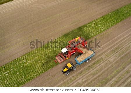 Harvested sugar beet crop root pile Stock photo © stevanovicigor