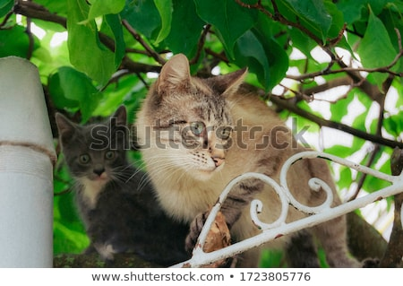 Kitty Near Mother Stock photo © cosma