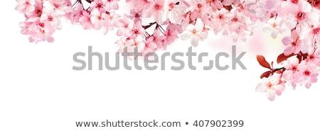 Pembe kiraz çiçeği gri mavi Retro çiçek Stok fotoğraf © neirfy